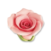 Rosen, rosa, mittel