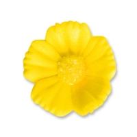 96 St. Feinzuckerblumen mittel gelb