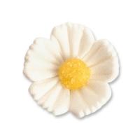 Blumen, weiß, mittel